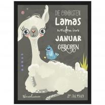 Wandbild: Die coolsten Lamas werden im (Monat auswählbar) geboren. (personalisierbar)